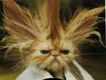 What is a Bad Hair Day?