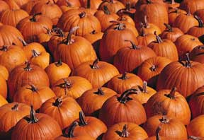 Pump Up Your Hair With Pumpkins!