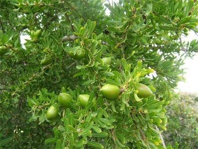 Ancient Botanical Ingredients Made New- Argan Oil