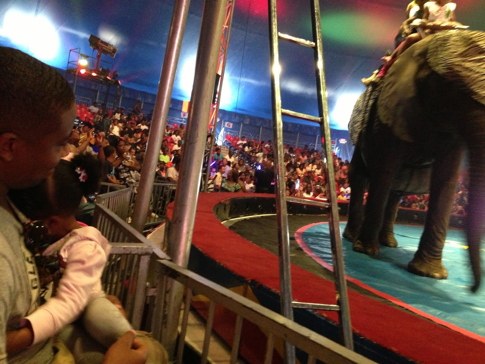 The Real Circus?!