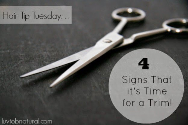 4 Signs That it's Time For a Trim!