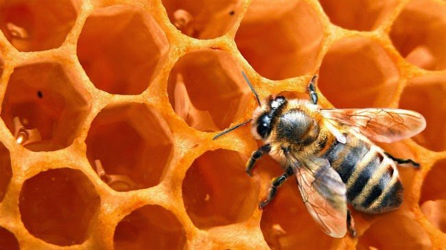 Honey for Growing Long, Natural Hair