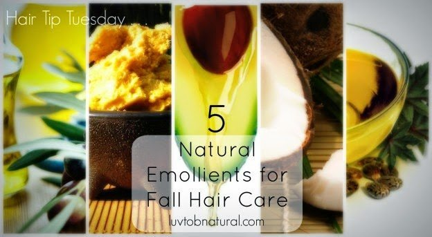 5 Ingredients to Increase Moisture Retention this Fall
