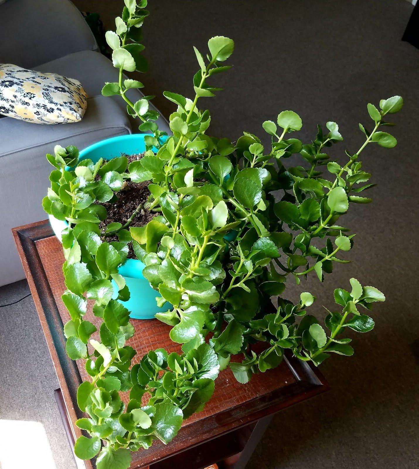 If You Don't Have a Succulent Plant, Here's What You're Missing