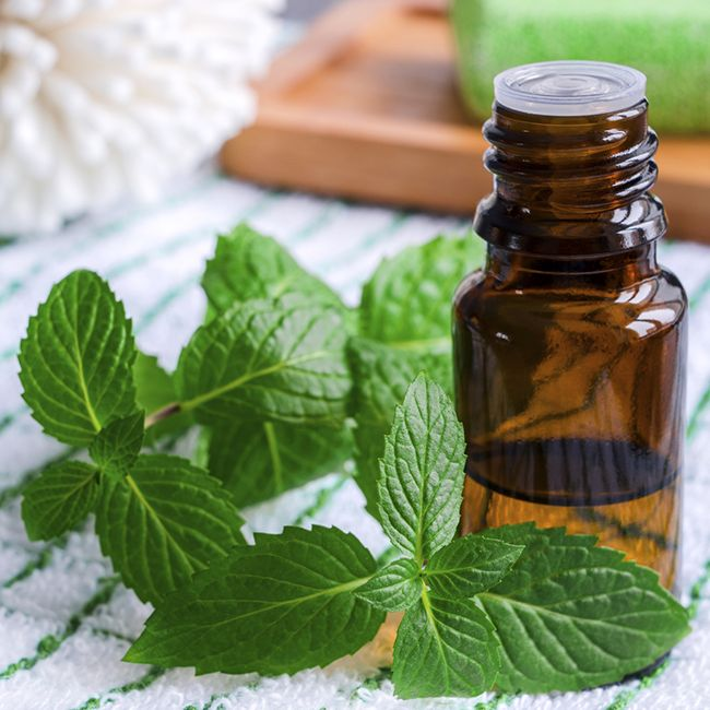 Why Peppermint Oil is a Powerhouse for Your Natural Hair