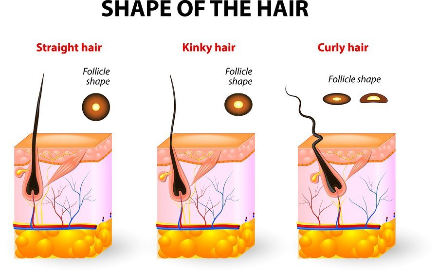 Why the Health of Your Scalp Matters and its role in Natural Hair Growth
